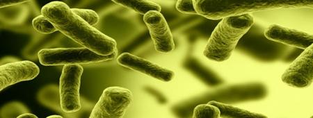 bacterias Archivos - Blog ICOEV 33b0bcc6eac5